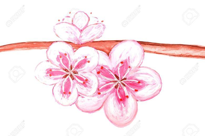 Dessin fleur de sakura du japon et des fleurs - Image fleur dessin ...