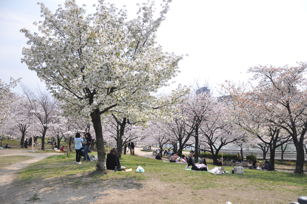fleurs de cerisier la fleur japonaise new naked girls. Black Bedroom Furniture Sets. Home Design Ideas