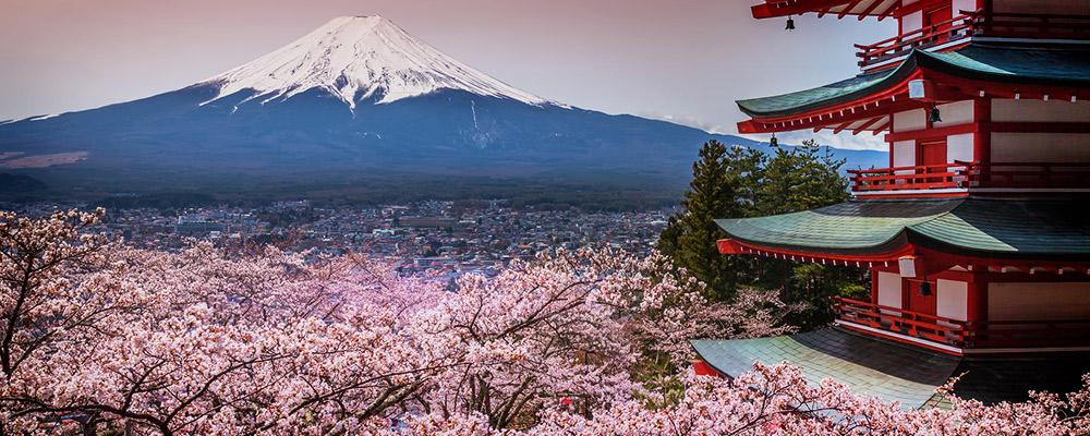 Floraison cerisier japon du japon et des fleurs - Greffe du cerisier au printemps ...