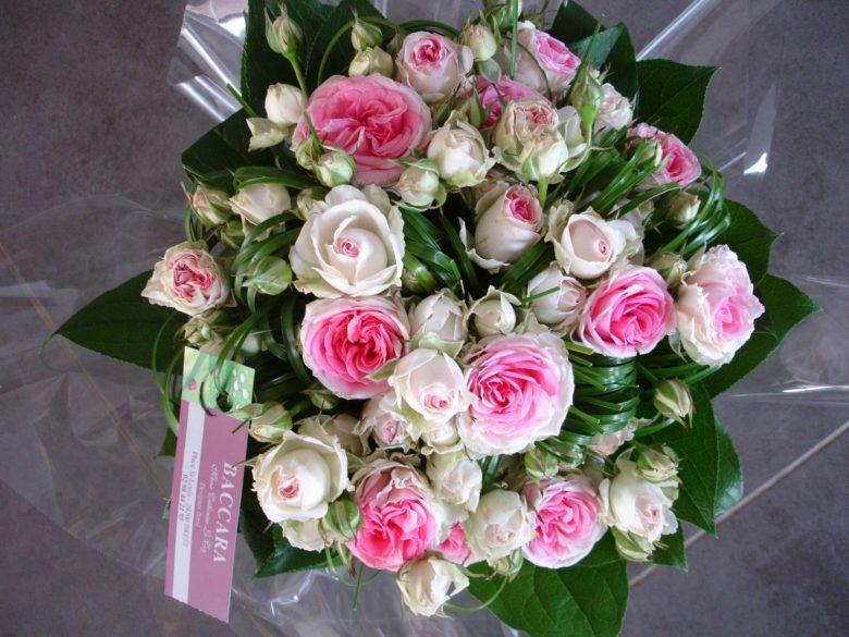 Top du japon et des fleurs - Page 3 sur 160 - . QJ96