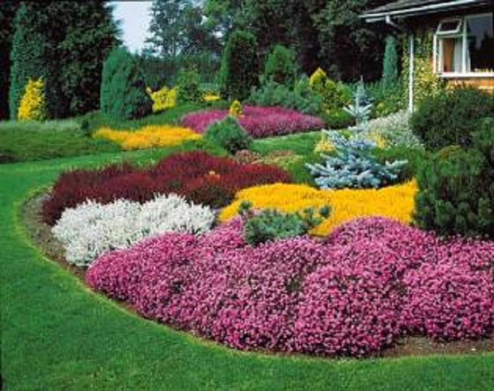 Fleurs jardin vivaces - du japon et des fleurs