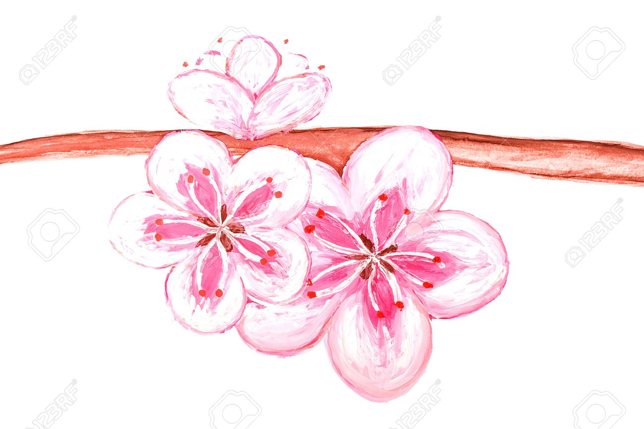 dessin fleur de sakura du japon et des fleurs. Black Bedroom Furniture Sets. Home Design Ideas