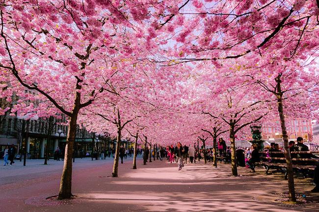 Paysage Japonais Cerisier Du Japon Et Des Fleurs