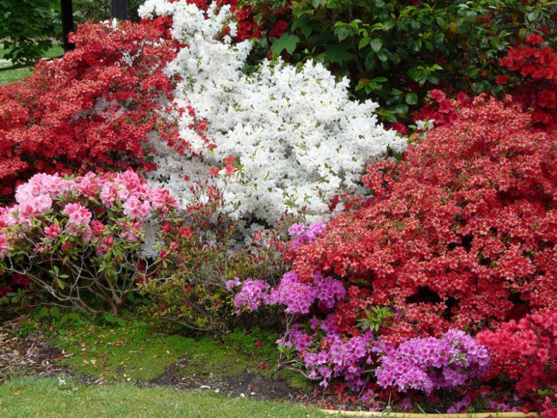 Plantes ombre jardin - du japon et des fleurs
