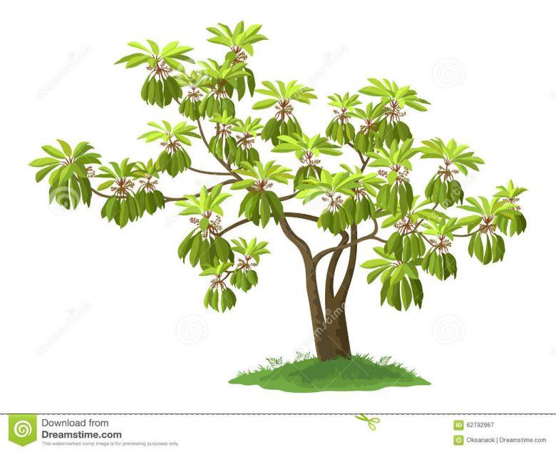 plante verte exotique du japon et des fleurs. Black Bedroom Furniture Sets. Home Design Ideas