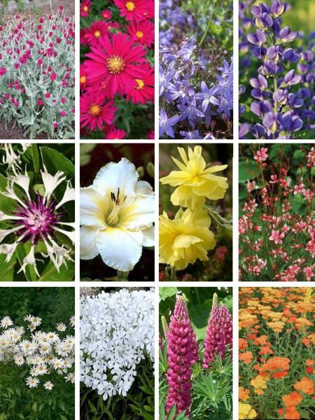 Massif fleurs vivaces plein soleil - du japon et des fleurs